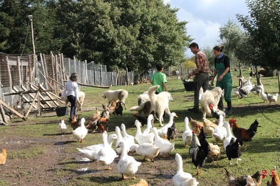 Agriturismo Pulicaro: Feeding the animals.