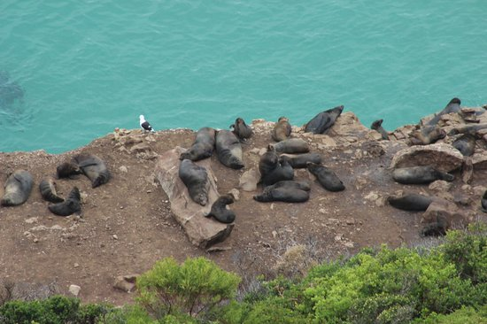 Robberg Nature Reserve : seals