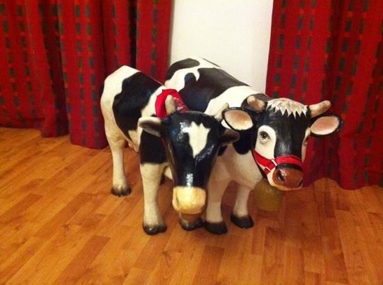 Roter Turm: vacas en el cuarto!