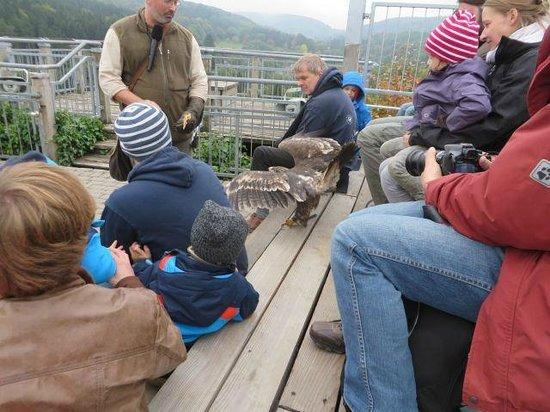 Adlerwarte Berlebeck bird interacting with audience