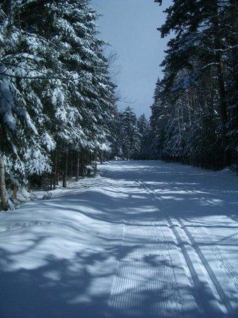 Mount Van Hoevenberg : Perfectly groomed trails