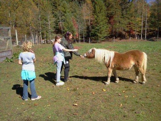 Enota Mountain Retreat : Meet the horses!