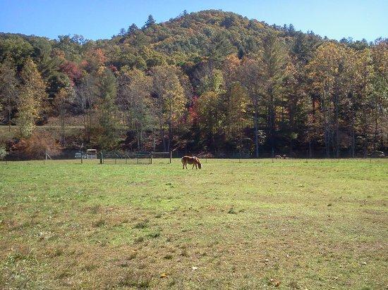 Enota Mountain Retreat : Gorgeous Views!
