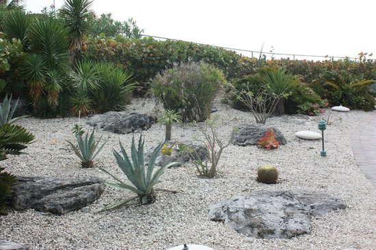Royal West Indies Resort: Cactus garden