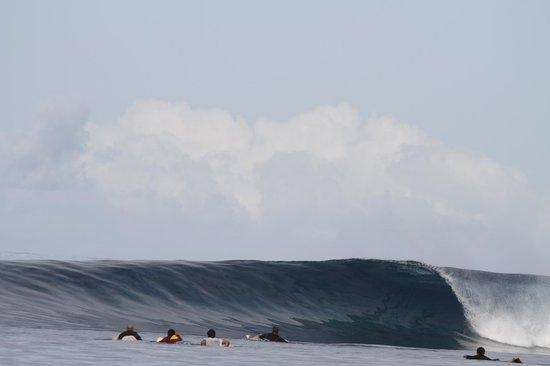 Tides Reach Resort : Surf