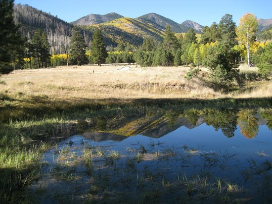 San Francisco Peaks: Nice reflection at Lockett Meadow.