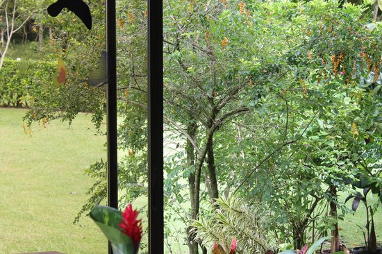Que Rico Arenal: Hummingbirds outside in the morning