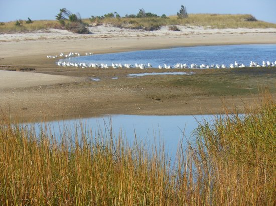 Paine's Creek: Sea Gulls' rest