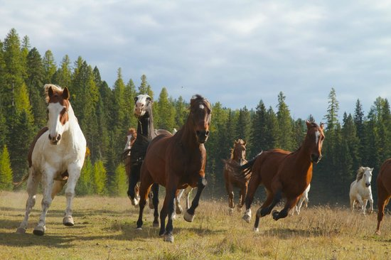 Bar W Guest Ranch: It was really fun photographing the running horses