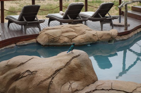 Jock Safari Lodge: Piscina do Lodge