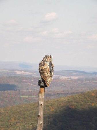 Hawk Mountain Sanctuary: Da Owl - at North Lookout