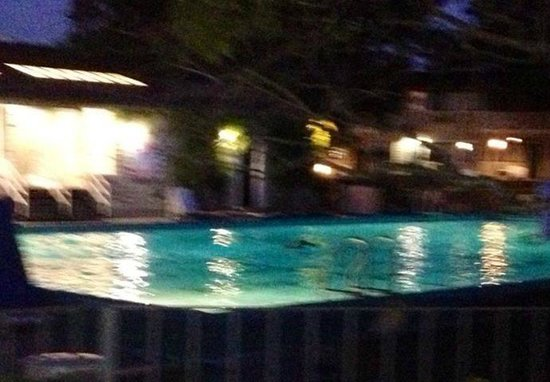 BEST WESTERN Corte Madera Inn : Jerry is that blob in pool at 6:30 am.....