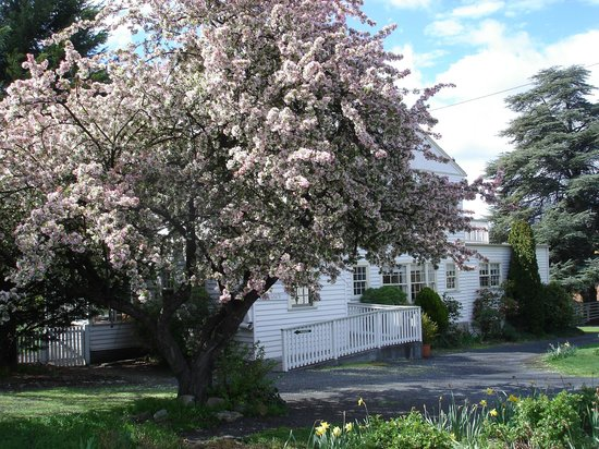Explorers Lodge: crabapple tree in full bloom October 2013