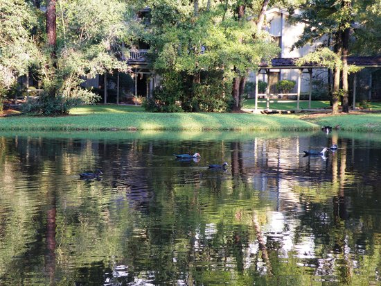 The Woodlands Resort & Conference Center: View across lake toward rooms