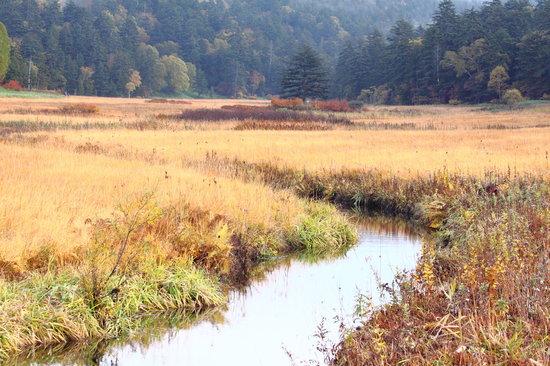 Oze National Park: 遥かな尾瀬 歌が自然に出てきます
