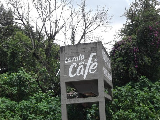 Casa Alvarada : Ruta del cafe