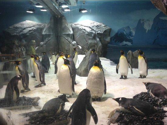 Sea World: Penguins