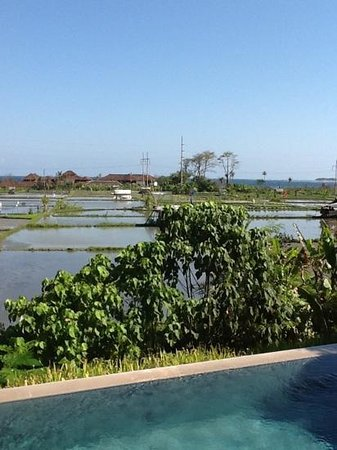 The Samata: rice field