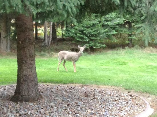 Candlewycke Inn B&B : Deer in the garden