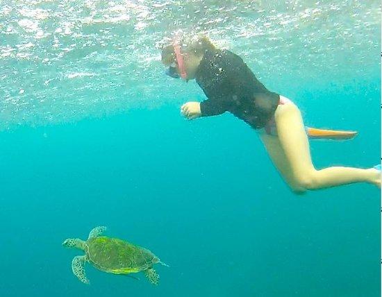Pom Pom Island Resort & Spa: snorkelling with turtles