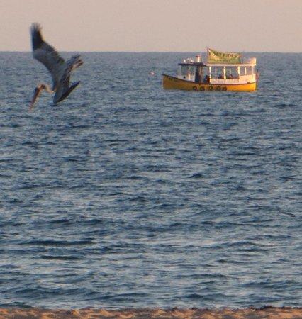 Inn At East Beach : Pelicans diving for fish