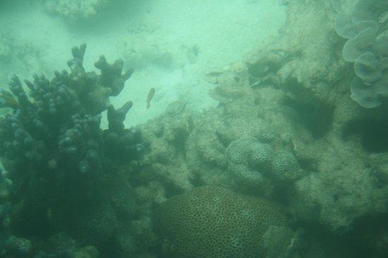 Ningaloo Ecology Cruises Glass Bottom Boat: One of many, imagine on a sunny day...