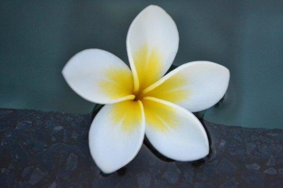 Four Seasons Resort Mauritius at Anahita: Flower in the pool