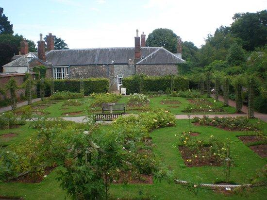 Cockington Court : giardino delle rose