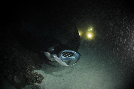 Espace Plongée : Manta Ray Snorkeling
