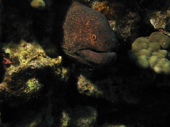 Prodiver Maui: eel