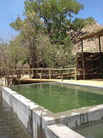 Chobe Bakwena Lodge: Pool
