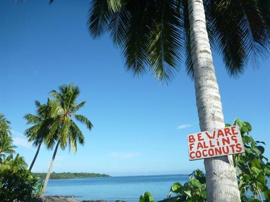 Va-i-Moana Seaside Lodge : Coconuts