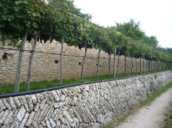 Azienda Agricola Corteforte: View of the vineyard