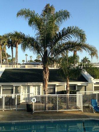Beach Haven Inn: Trevlig pool rent och snyggt