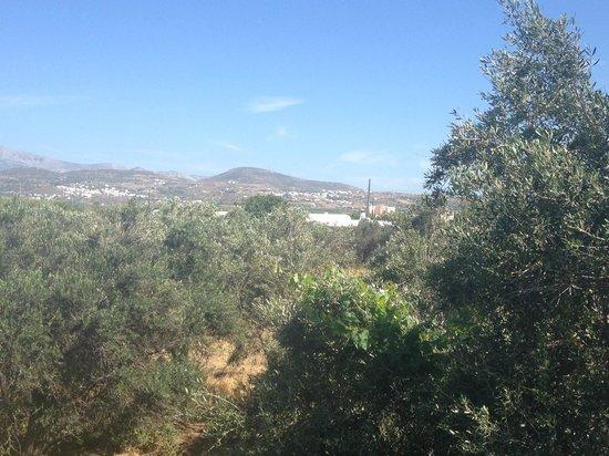 Naxos Holidays Bungalows Apartments: Uitzicht vanuit kamer