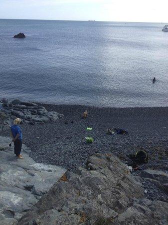Wavecrest Scuba: Porthkerris Dive Site