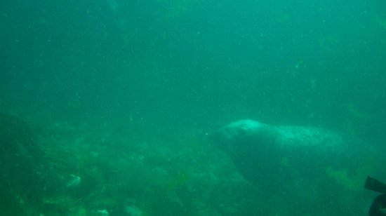 Wavecrest Scuba : Newquay Headland Seal
