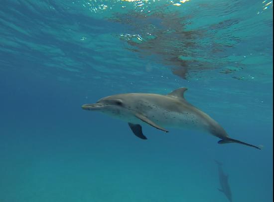 WildQuest: dolphins