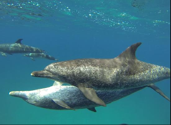 WildQuest : dolphins