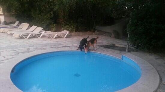 Sitia Beach City Resort & Spa : dogs were drinking from the children pool