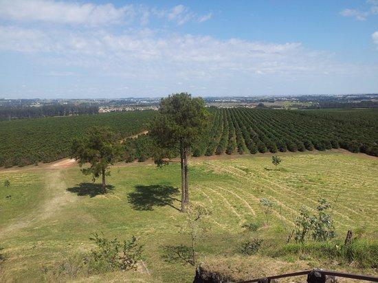Fazenda Tozan (Monte d'Este)