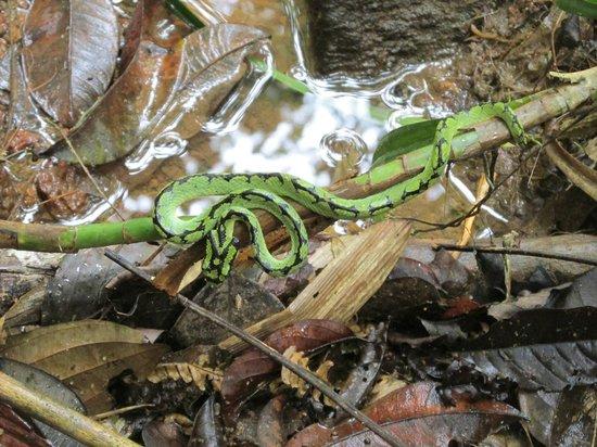 Galle, Sri Lanka: Змея