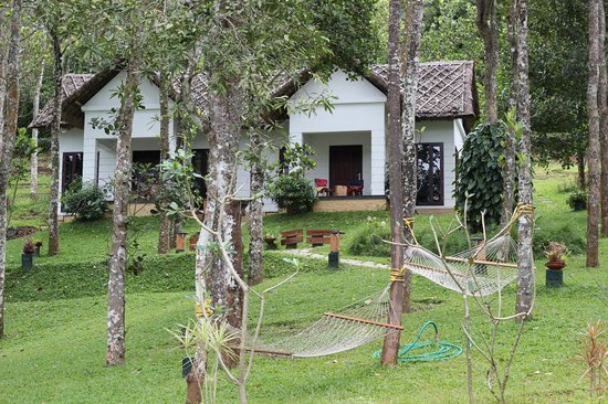 Niraamaya Retreats Cardamom Club - Thekkady : Cottage at sun light