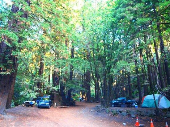 Camping at Limekiln State Park California