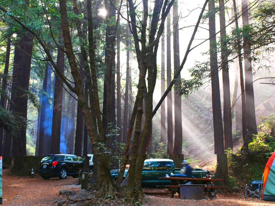 Spectacular morning light shinng through Redwoods at Limekiln State Park, California