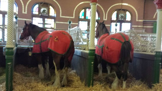 Budweiser Brewery Experience: Stable
