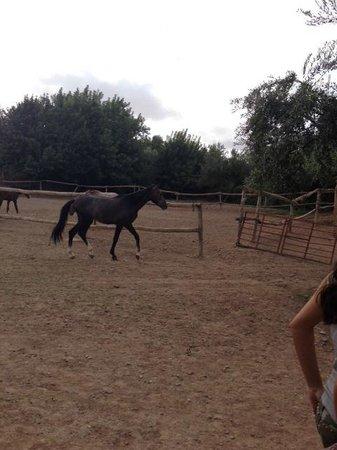 Kasbah Agafay : Ranch