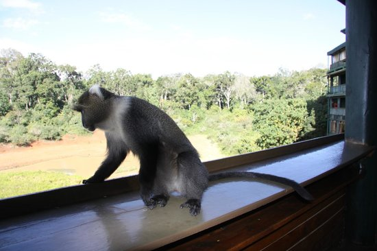 monkey on our balcony