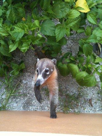 Luxury Bahia Principe Akumal : Our cute new friend