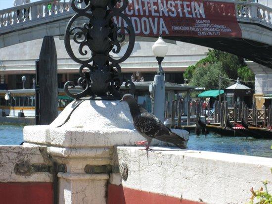 Ca' Nigra Lagoon Resort : vue du jardin des roses sur le Grand Canal
